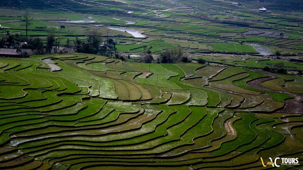 risaie-in-vietnam